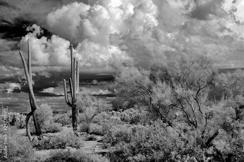 Photo sur Aluminium Taupe Infrared image Sonora Desert Arizona