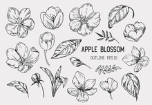 Set Of Apple Flowers. Hand Dra...