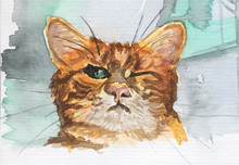 Watercolor Painting - Funny Winking Cat