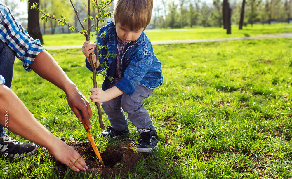 Fototapety, obrazy: Father with child holding hands. little boy helping his father to plant the tree while working together in the garden. sunday. smiling face. spring time.  volunteer with sprout for growing.