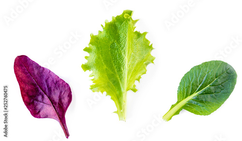 Fotografia Variety of Salad leaves
