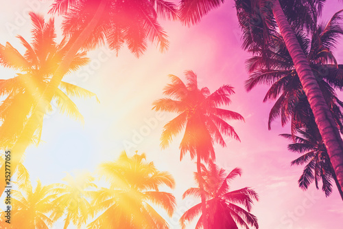 Poster Trees Copy space of tropical palm tree with sun light on sky background.