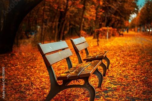 Valokuva  Herbst Blätter Bank