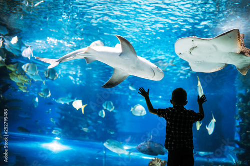 Little boy watching fishes in aquarium