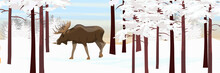 The Elk Goes Through The Snow-...