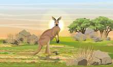 Large Red On The Plain With Stones, Dry Grass And Trees. Wild Animals, Endemics Of Australia. Realistic Vector Landscape