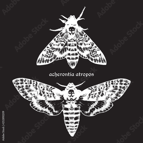 Photo Deaths head hawk moths hand drawn dot work vector illustration