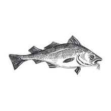 Vector Hand Drawn Lavender Fish Illustration.