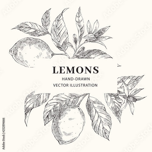 Fotografie, Obraz  Lemon hand drawn vector frame layout