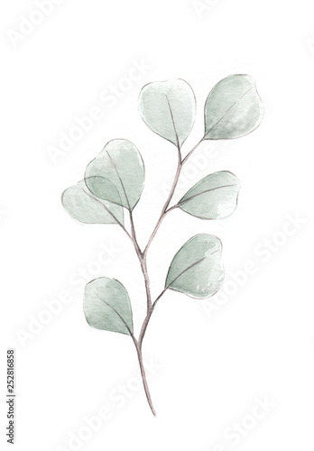 Fototapety, obrazy: Silver dollar eucalyptus watercolor illustration