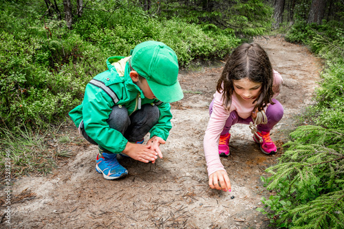 Fotomural  Little children boy and girl sitting on forest ground exploring and learning about nature and insects