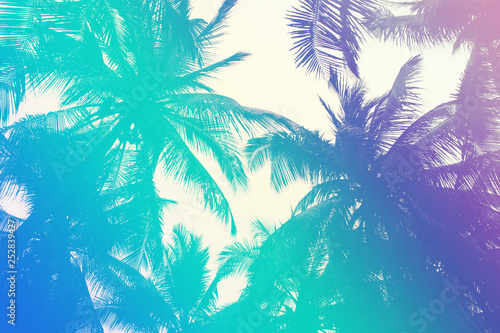 Tela  Colorful tropical 90s/80s style palm tree jungle background texture with pink, t