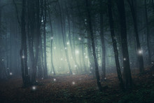 Fantasy Forest Scene With Magi...