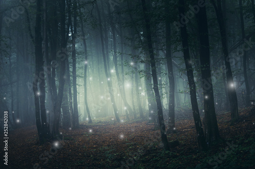 Photo fantasy forest scene with magical sparkles on mysterious path