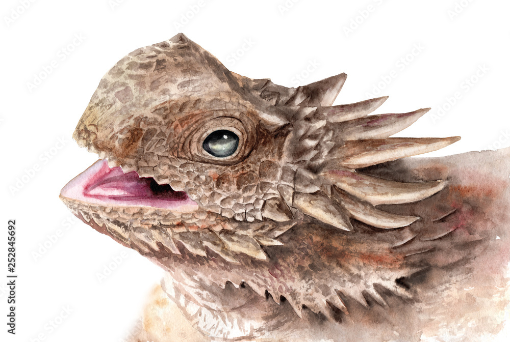 Fototapeta watercolor drawing of animals - a toad lizard