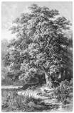 Ilustracja dębowa / vintage z Meyer's Conversation Lexicon 1897 - 252856025
