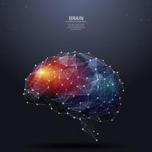 Brain Low Poly Color
