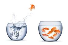 Gold Fish Change Move Retrun S...