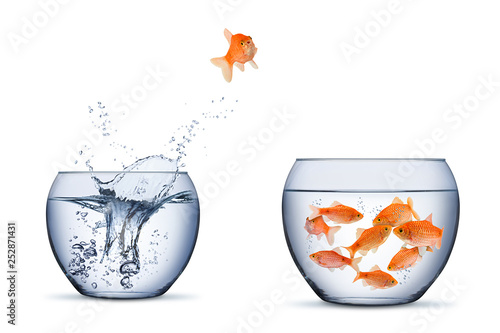 Foto gold fish change move retrun separartion family teamwork concept jump into other