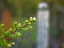 Wild White Flowers Through A M...