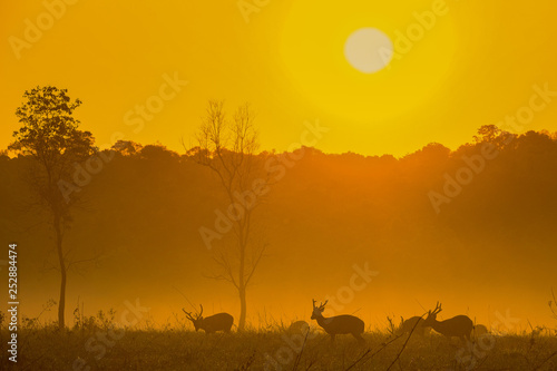 Foto auf Leinwand Honig Family Sunset Deer at Thung Kraang Chaiyaphum Province, Thailand