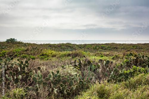 Fotografia, Obraz South Padre Island cactus and vegetation along the Gulf of Mexico