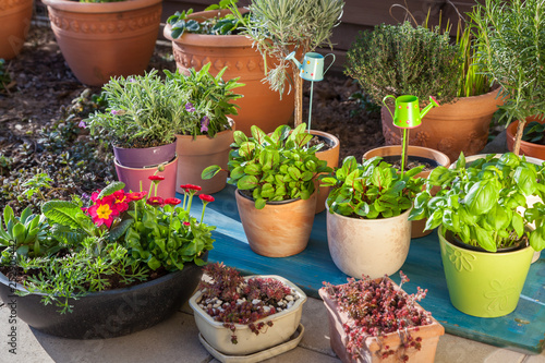 Variation of flower pots with herbs and other plants Fototapeta