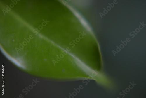 Fotografija  green macro