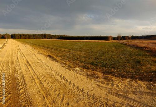 Fototapeta widok na pole i las obraz