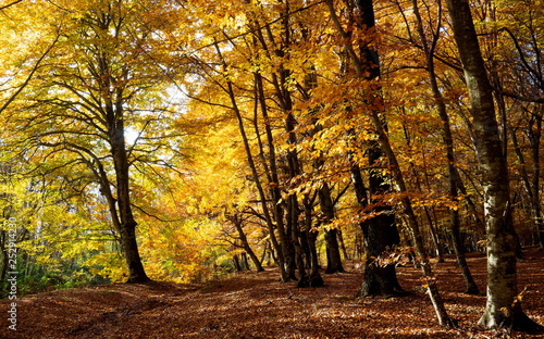 Immersed in the colors of autumn © Alessandro