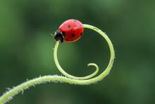 Ladybug 12