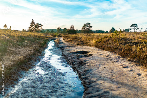 Canvas Print Creative heathland cutting