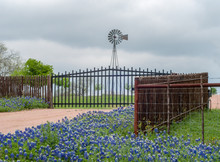 Bluebonnets Lining Ranch Entrance With Water Windmill In Background