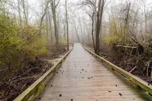A Woodland Walkway Through A M...