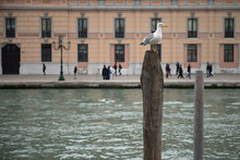 Seagull Atop A Wooden Pole Of ...