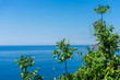 Italy, Cinque Terre, Corniglia, a tree next to a body of water