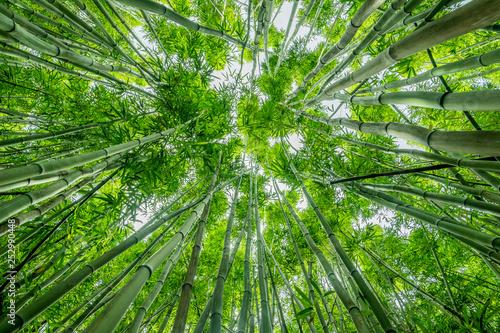 Keuken foto achterwand Bamboo Vertical view in bamboo forest