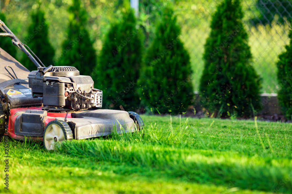 Fototapety, obrazy: Lawn mower cutting green grass