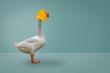 Leinwanddruck Bild - Goose wearing a rubber duck mask on blue pastel background