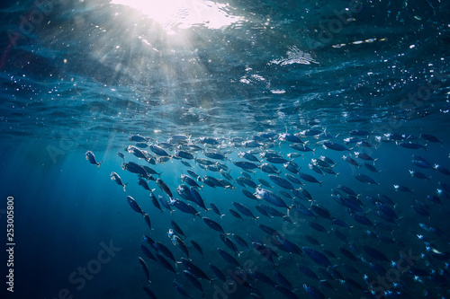 Photo Underwater world with school in blue ocean and sun light