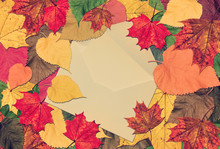 Autumn Marvelous Colorful Leaves Frame With Post Envelope And Vintage Blank Card Inside