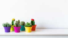 Various Flowering Cactus And Succulent Plants In Bright Colorful Flower Pots Against White Wall. House Plants On White Shelf Panoramic Banner With Copy Space.