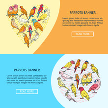 Bright Parrots Flyer Templates In Flat Style