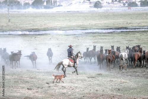 Poster de jardin Vache wild horses and cowboys.kayseri turkey
