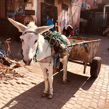 Marrakesch Esel