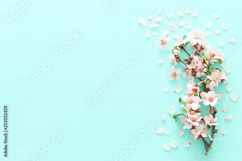 Photo  photo of spring white cherry blossom tree on pastel mint wooden background