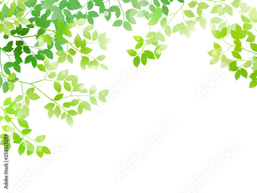 Foto Green leaf and light background