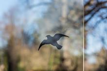 Sticker Of A Bird Against Bird...