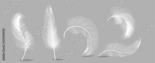 Fotografie, Obraz  White Feathers Set Vector