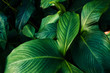 canvas print picture - Blätter im Close-Up